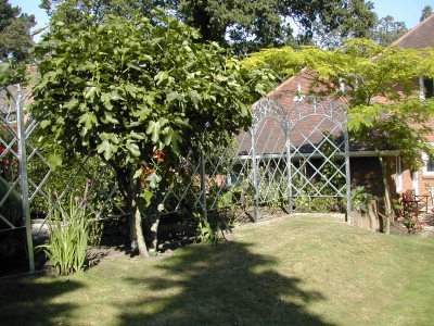 Trellis for Climbing Plants